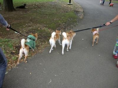 小金井公園を散歩
