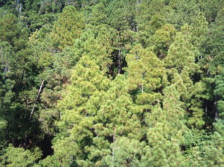 スカイレールから見た熱帯雨林 2