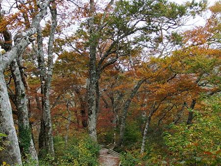 紅葉が進む元谷への登山道