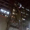 写真: 街路樹倒れそう