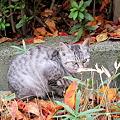 Photos: 猫と落ち葉です。Canon PowerShot S95にて撮影しました。