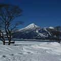 Photos: 花の振り袖雪化粧